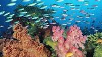 Migliori sfondi desktop con pesci tropicali, fondali marini e oceani