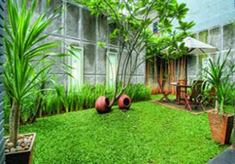 jual tanaman hias rumput gajah mini tukang taman dll
