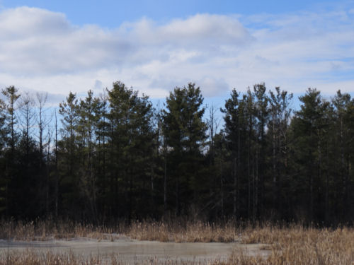 ice covered pond with pines and blue sky
