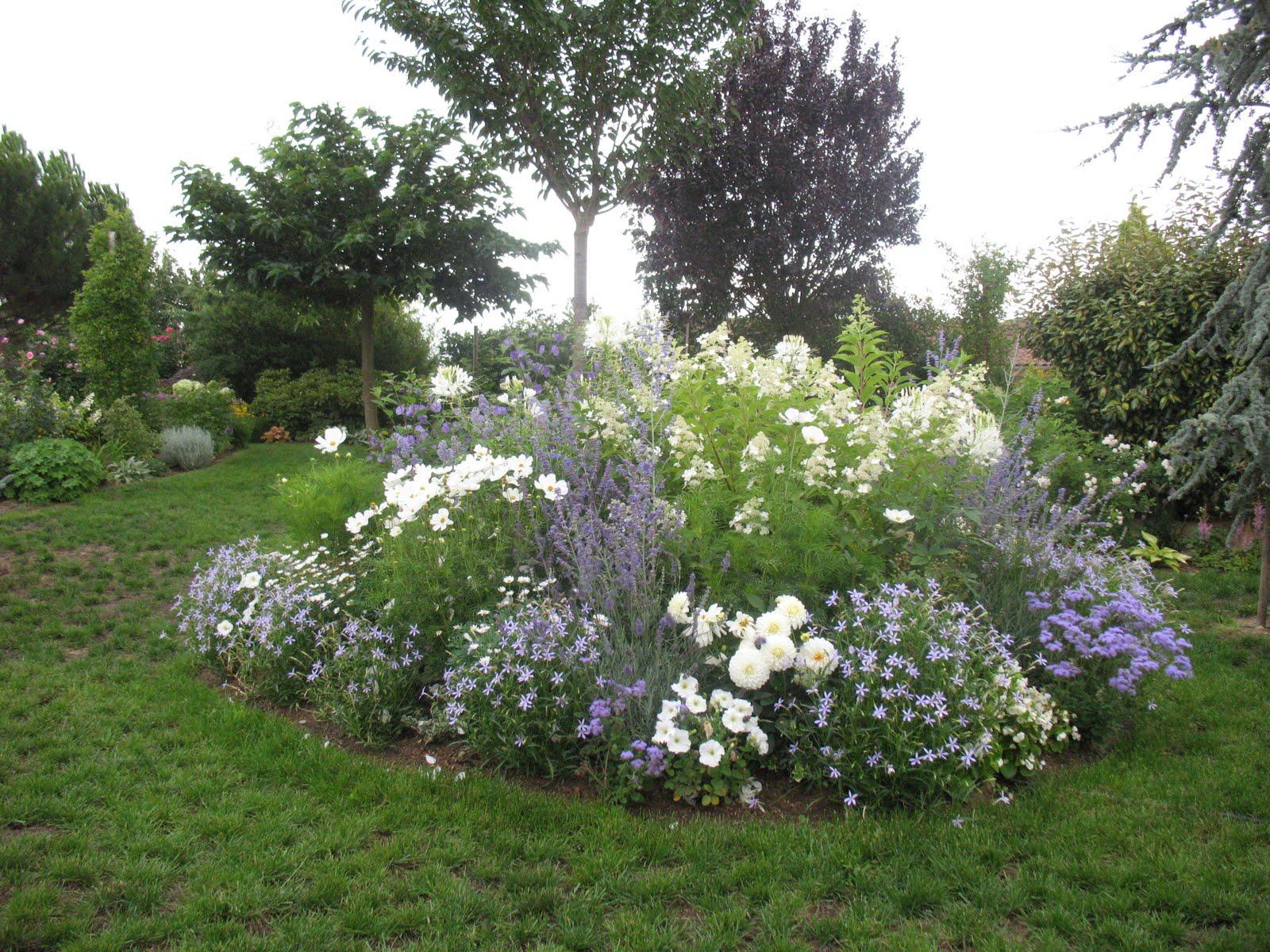 Roses du jardin Chêneland: Création d\'un massif en bleu et blanc.