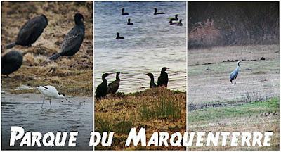 parco naturale marquenterre alta francia
