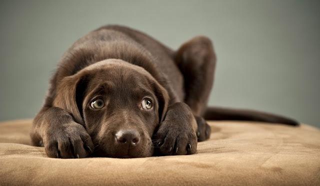 Chien peureux : Comment éduquer un chien qui a peur ?