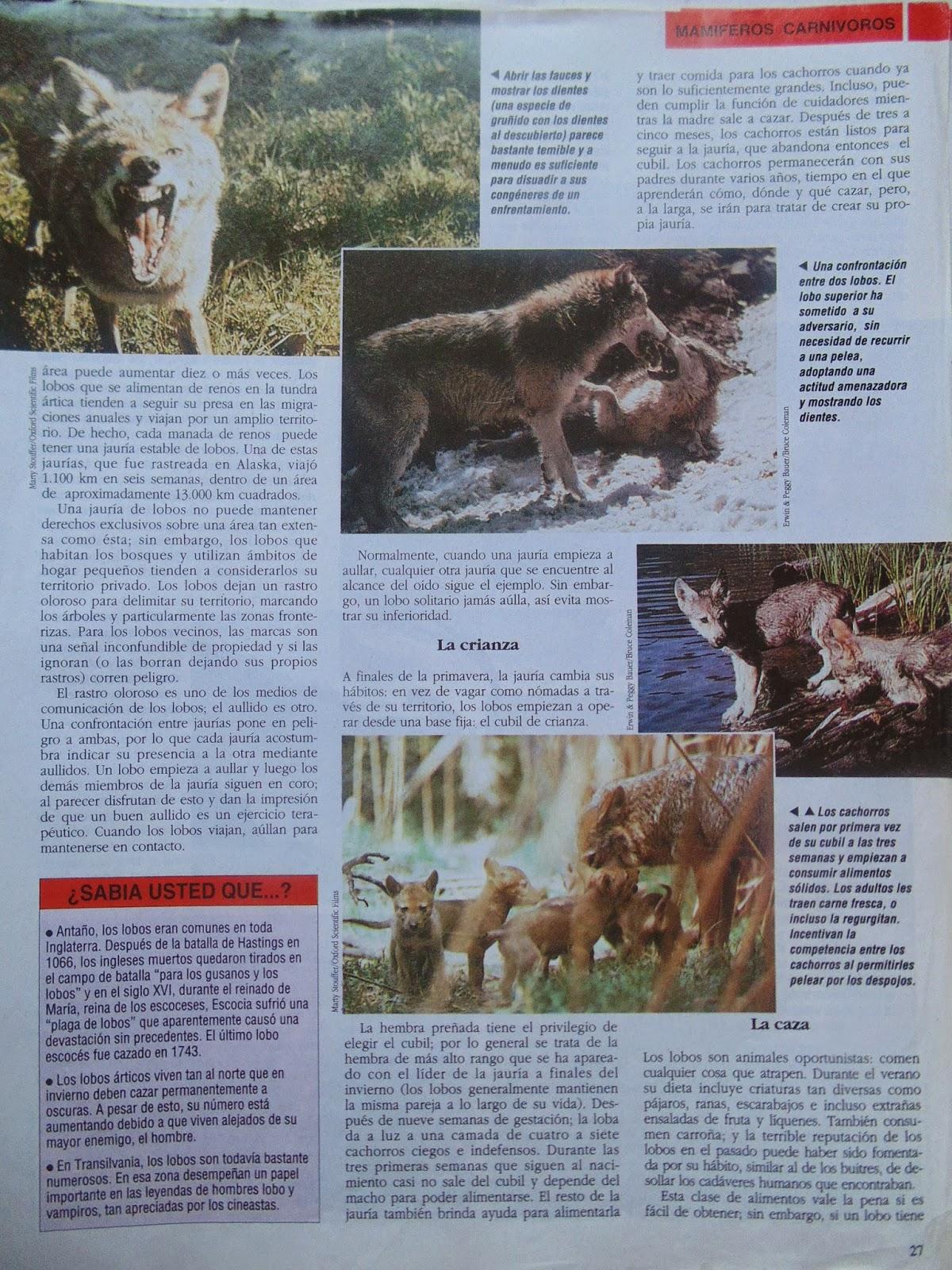 Aullando en el bosque: Información