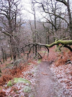 Near the end of the path up Craigendarroch, Deeside