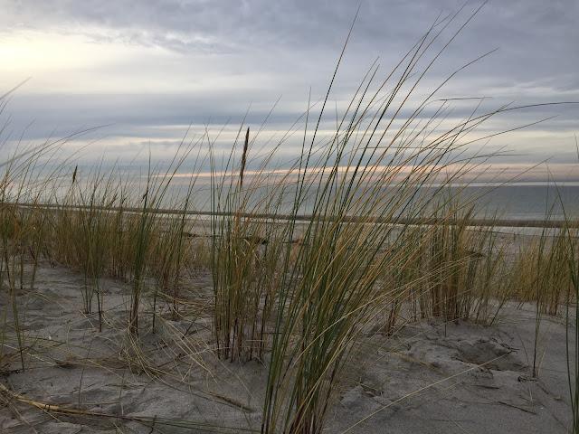 Ostsee mit Grünzeug