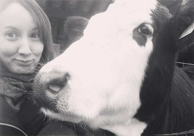 Cow selfie - Gorgie City Farm