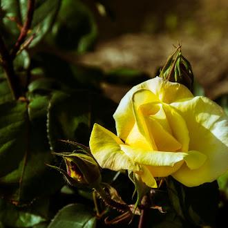 El amarillo como color principal