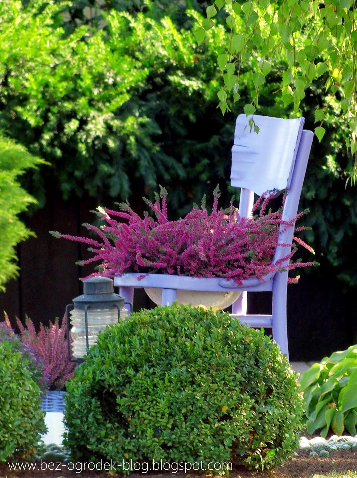 Jak Mieć ładne Wrzosy Na Balkonie Bez Ogródek Blog