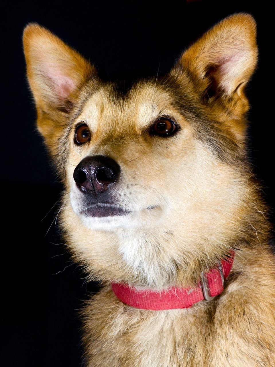 The SP Kennel Dog Log: Yukon Quest Team Rosters