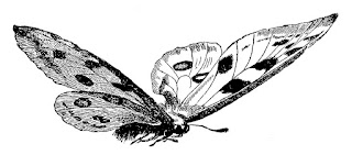 butterfly image insect illustration