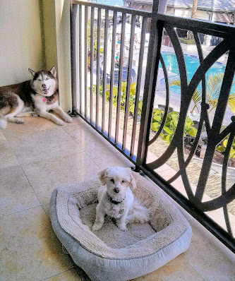 Dog Travel Tips.  Travel with dogs. Dogs. Pet Travel, Dog friendly hotels in South Florida,