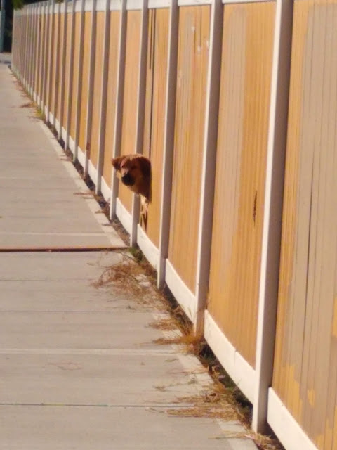Doggone fence