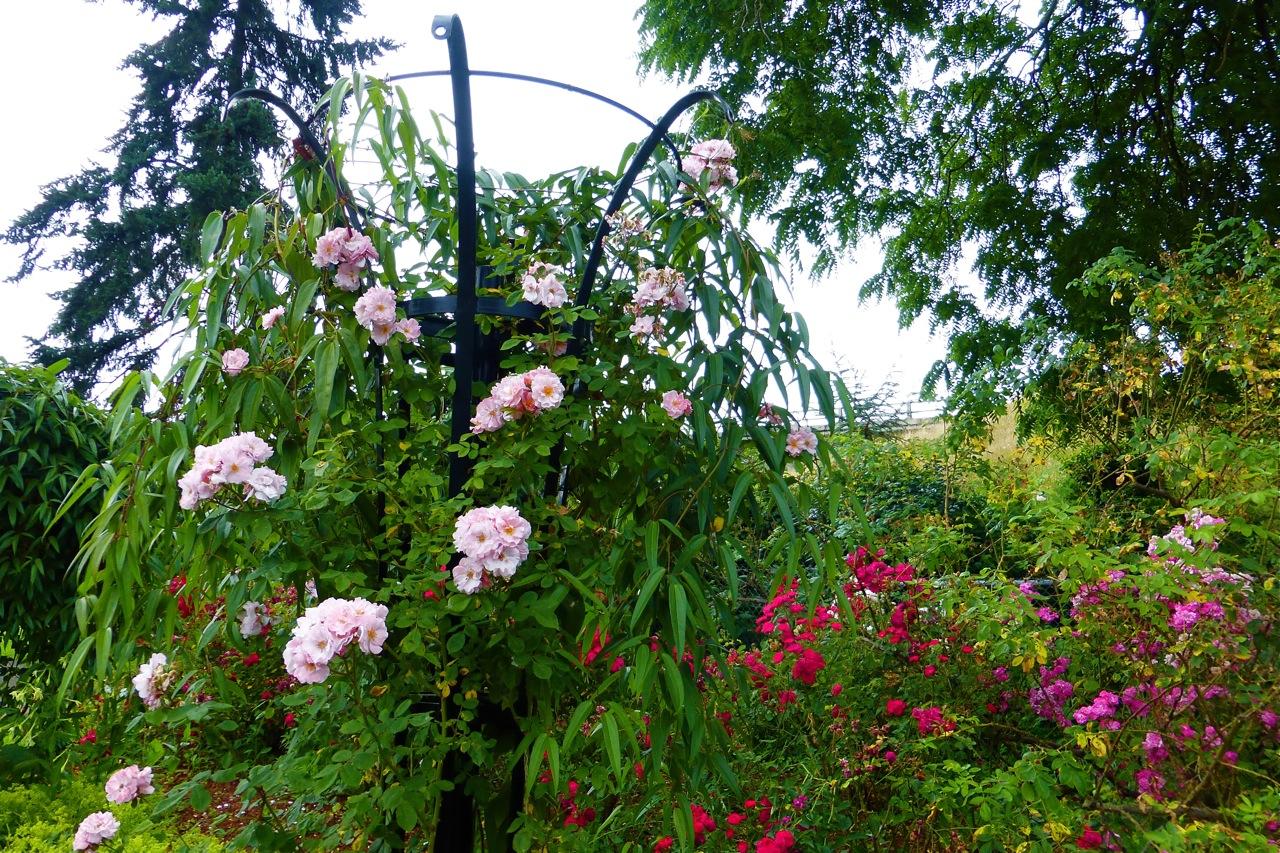 Owen Rose Garden, rose garden, roses, rose park