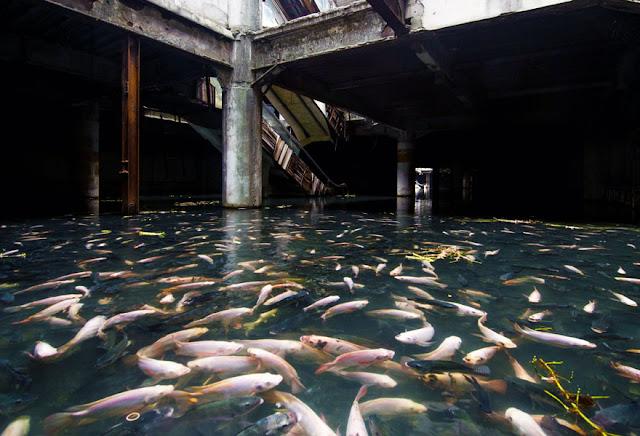 الاستيلاء على مول مهجور من قبل الأسماك – بانكوك
