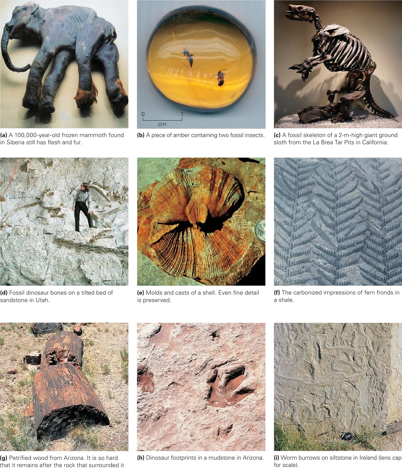 Fossilization Learning Geology