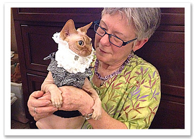 Disco the Sphynx in brocade vest and lace cravat