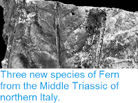 http://sciencythoughts.blogspot.co.uk/2013/06/three-new-species-of-fern-from-middle.html