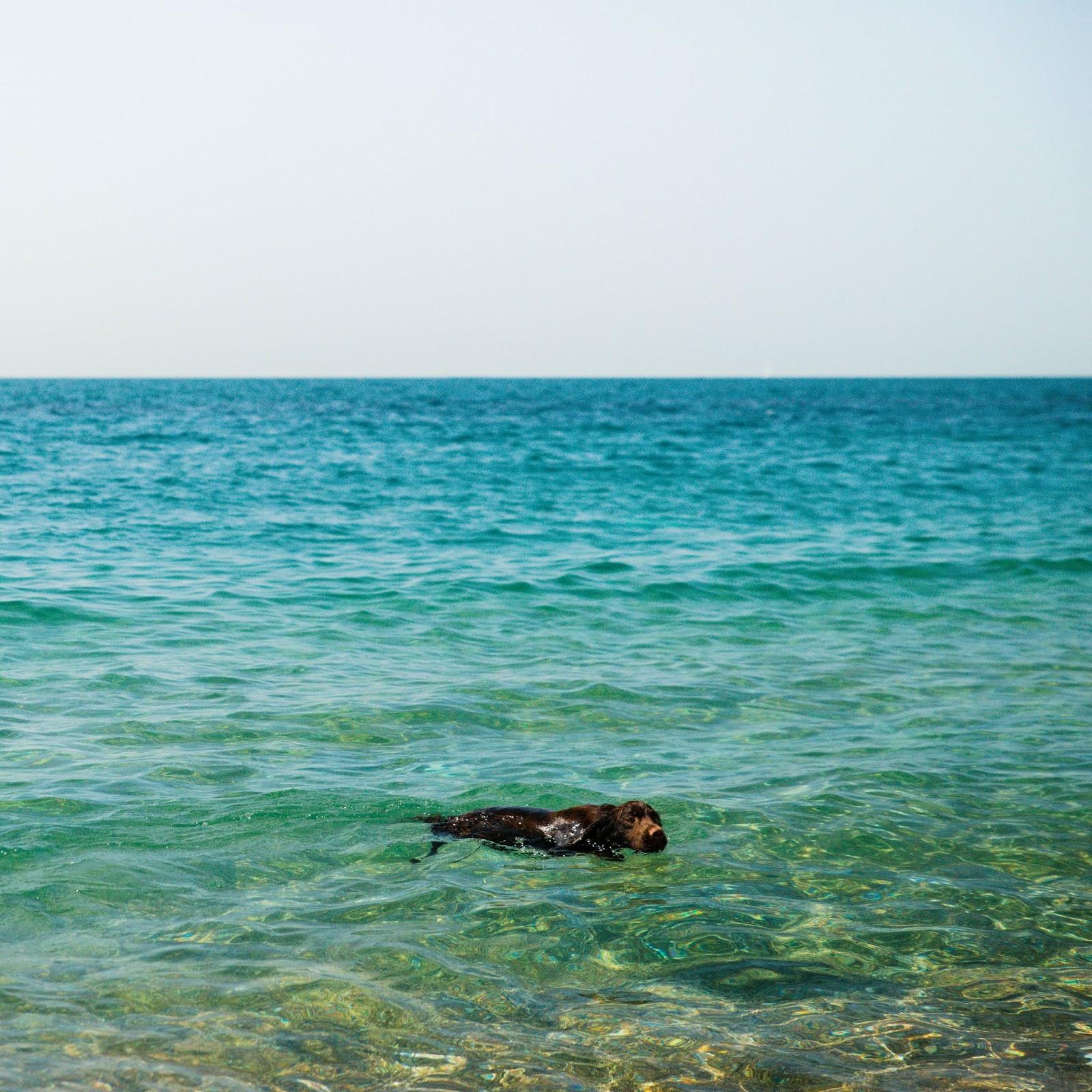 durdle door guide dog friendly liquid grain liquidgrain review