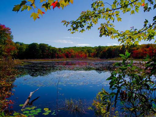 Pond along The Mattatuck Trail - Plymouth CT
