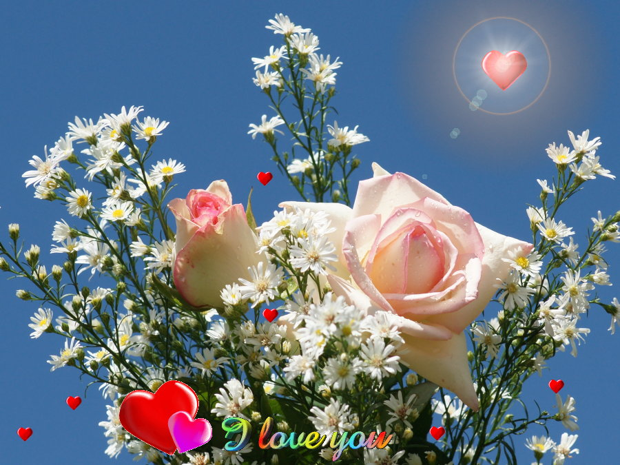 Funny Pictures Gallery: Love Roses And Hearts, Love Rose