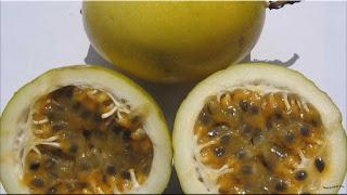 gambar buah voavanga