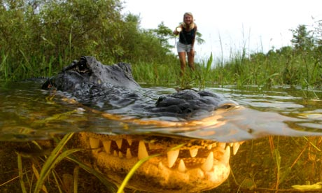 Inilah 7 buaya terbesar di dunia yang paling menyeramkan sesuai dengan nama daratan kota tempat di temukannya reptil ini yeah buaya florida ini memang di temukan di daratan kota ini yang memiliki panjang reheart Images
