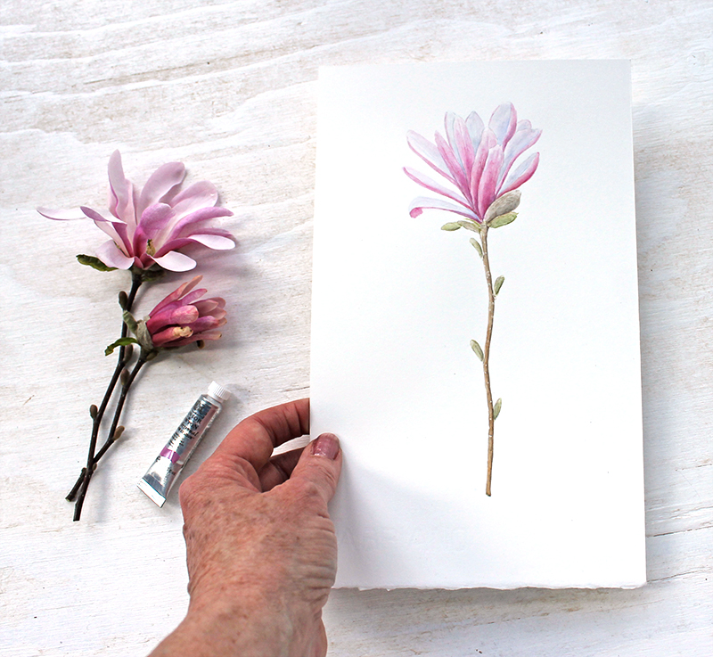 Botanical watercolor painting of pink star magnolia