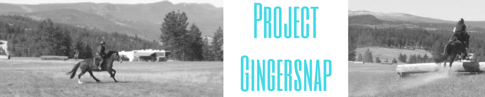 Project Gingersnap