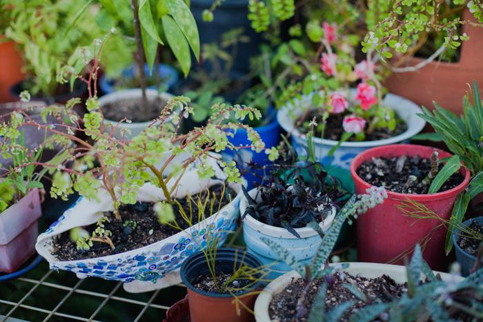 qld greenhouse