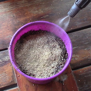 Guia completa para el cultivo de la manzanilla - 3