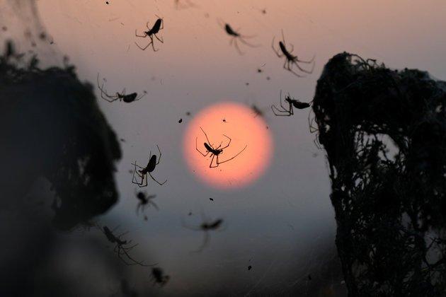 Η επιστημονική εξήγηση για το πέπλο αράχνης στο Πόρτο Λάγος - ΦΩΤΟ