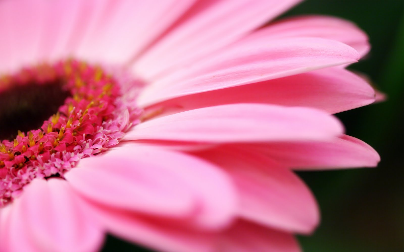 Cool wallpapers cool flowers wallpapers pack 1 - Pink flower wallpaper background ...