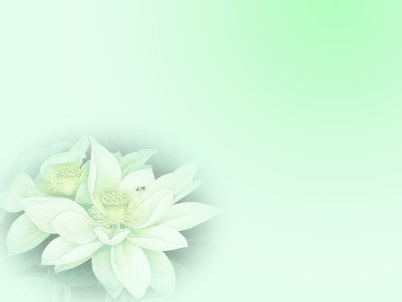 Hand-painted lotus PPT background
