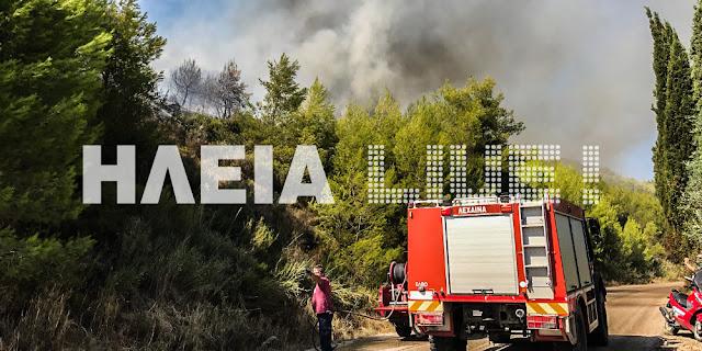 Μεγάλη πυρκαγιά σε δάσος στην Ηλεία