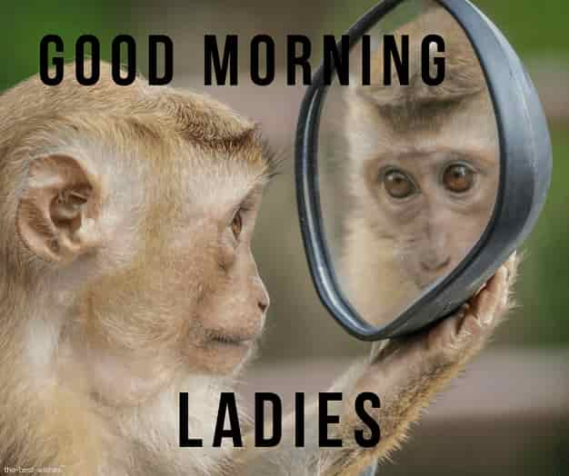 cute monkey good morning images