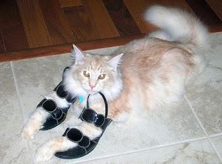 靴が大好きな可愛い猫4