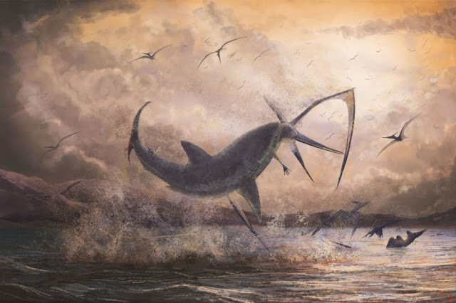 Fossil evidence suggests fearsome shark 'took down' flying pterosaur