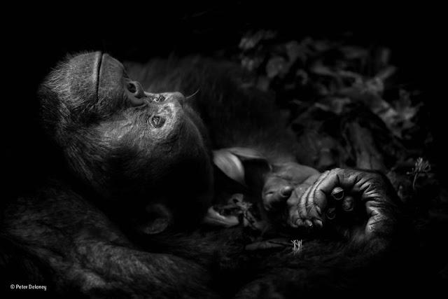 ganadores-Concurso-Internacional-Fotografía-Animal-2017-museo-de-historia-nacional