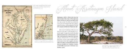Natural Wonders of Assateague Island  sample 1