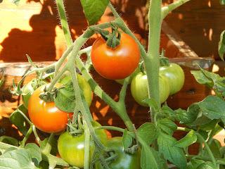 biovegan gärtenrn