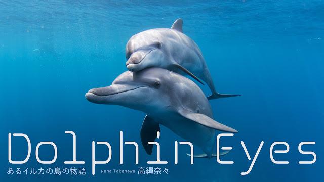 Dolphin Eyes あるイルカの島の物語 高縄奈々