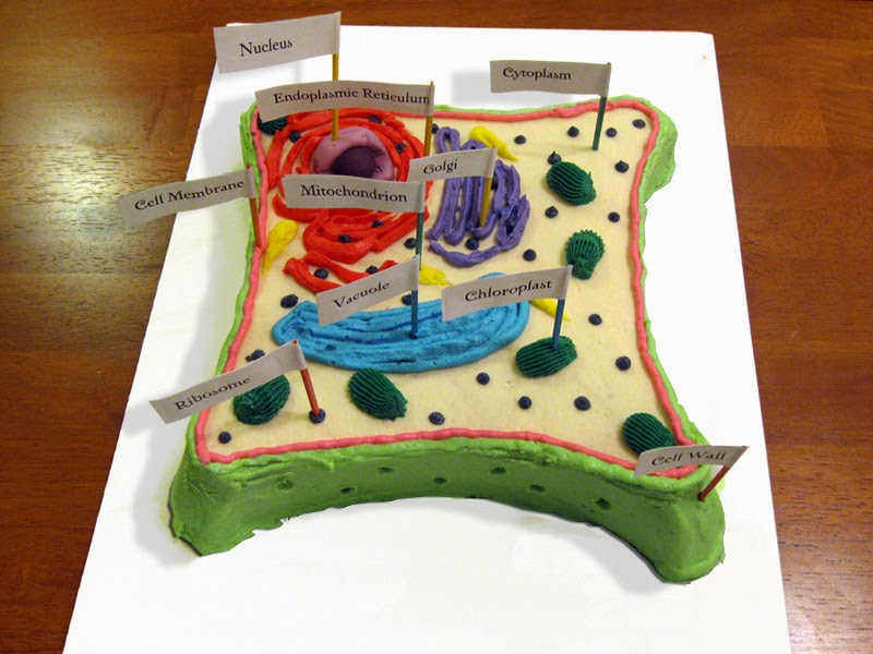 Natural Science 1 & 2, Biology-Geology 3: Science Project ...