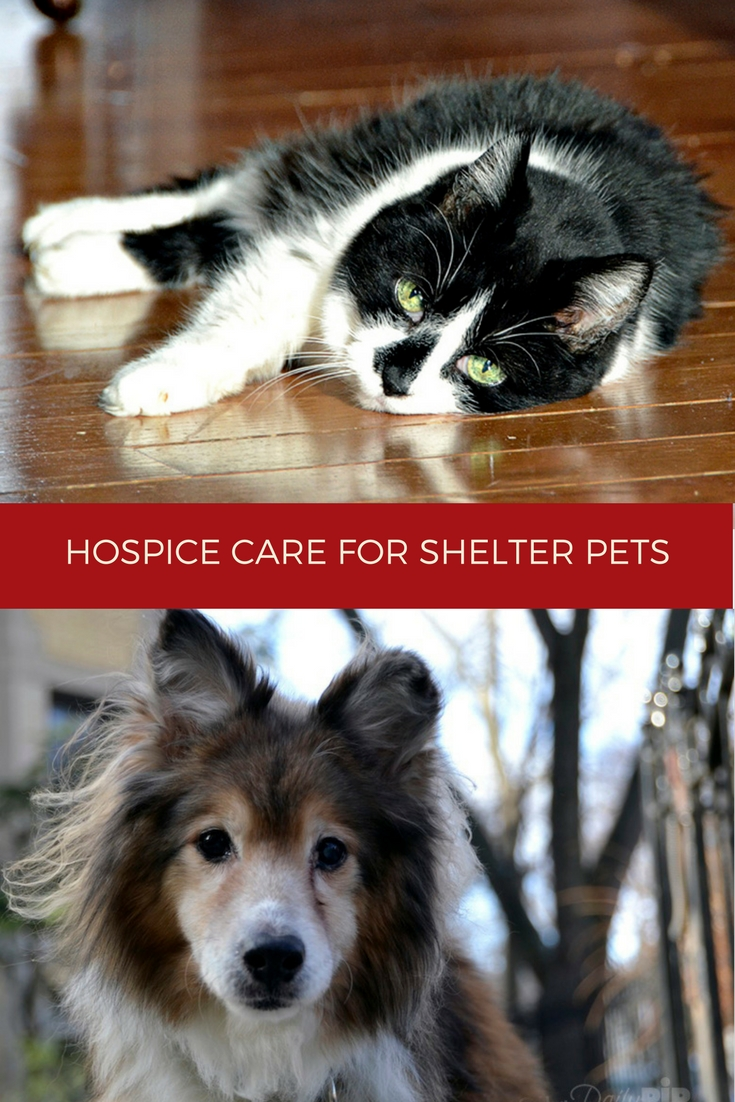 Providing hospice care for shelter and homeless pets allows pets to pass surrounded by love, comfort, and finally home