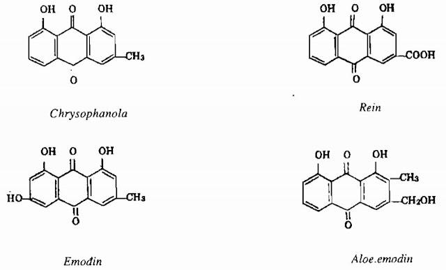 TP HH Đại Hoàng - Rheum - Nguyên liệu làm thuốc Nhuận Tràng và Tẩy