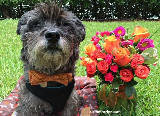 oz bouquet of flowers