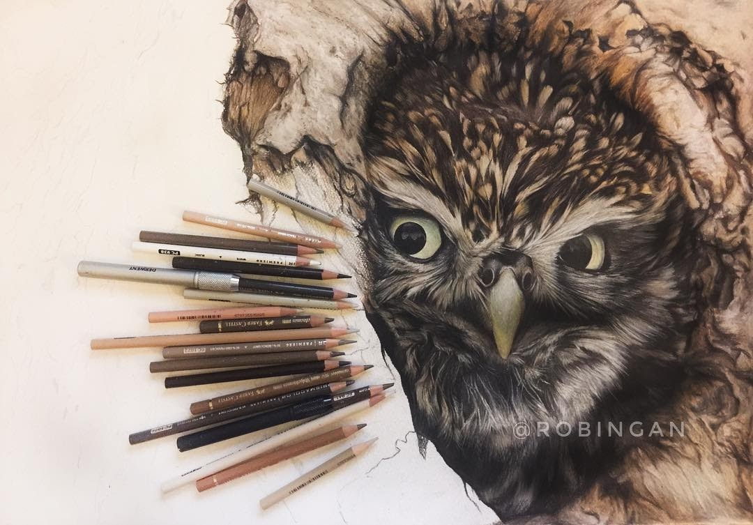 03-Owl Chick WIP-Robin-Gan-Realistic-Color-Pencil-Animal-Drawings-www-designstack-co