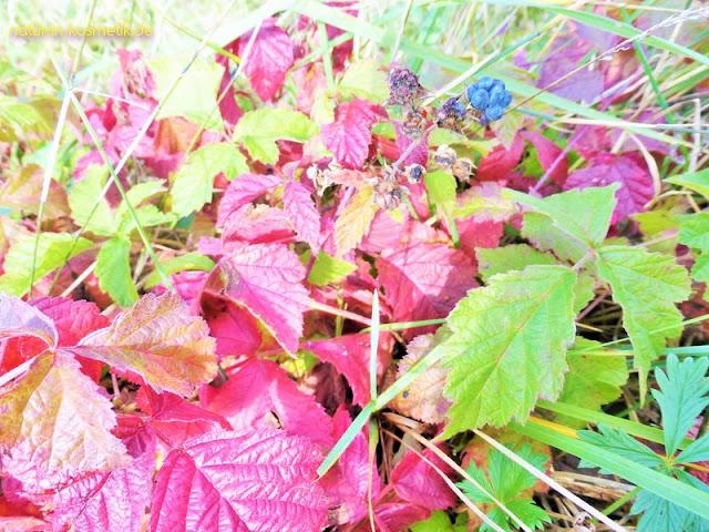 Brombeeren erfreuen im Herbst mit wunderbaren Farben