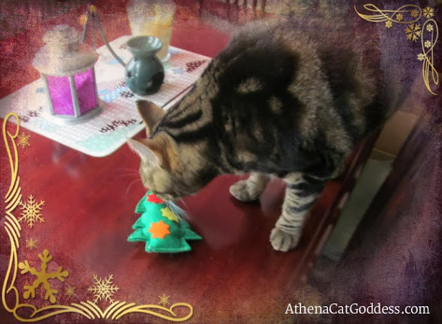 Athena the cat sniffs catnip toy