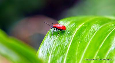 Insecte d'été