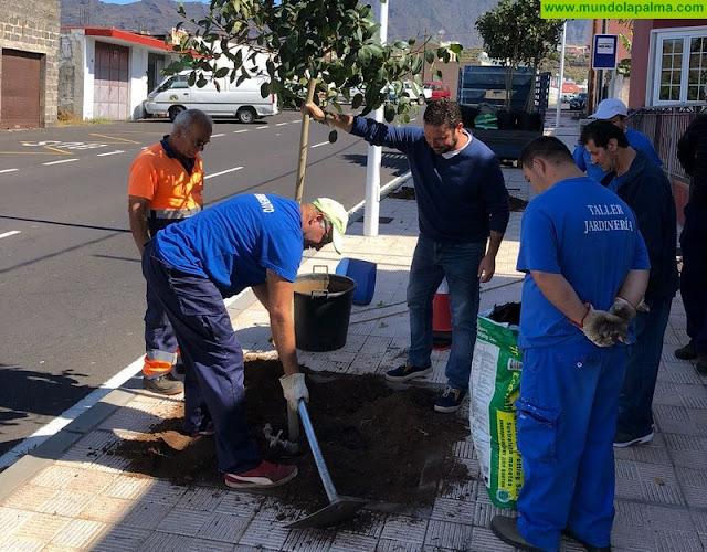 El Ayuntamiento conmemora el Día Mundial del Medio Ambiente plantando árboles en espacios públicos del municipio